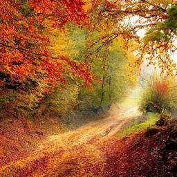 Mindfulness ed accettazione